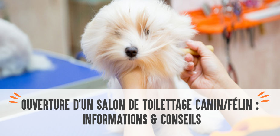 Ouverture d'un salon de toilettage canin/félin